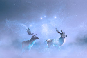 my_deer_suite2-300x200